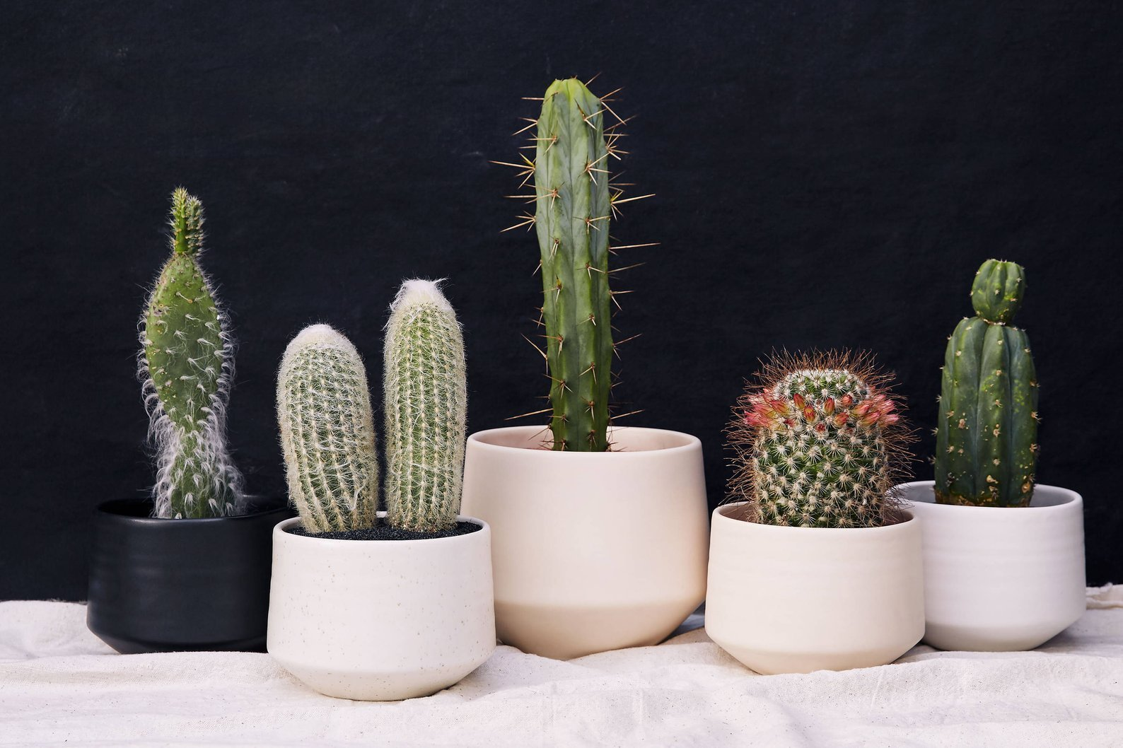 different colored porcelain succulent planters in white, ivory, black, and blush