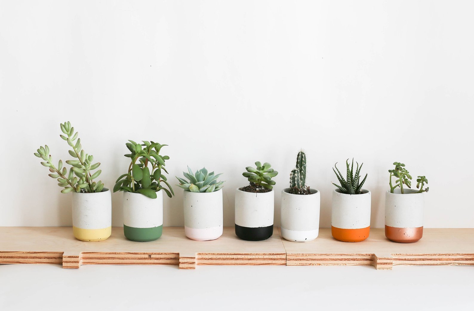 7 succulent planters lined up with succulents in them