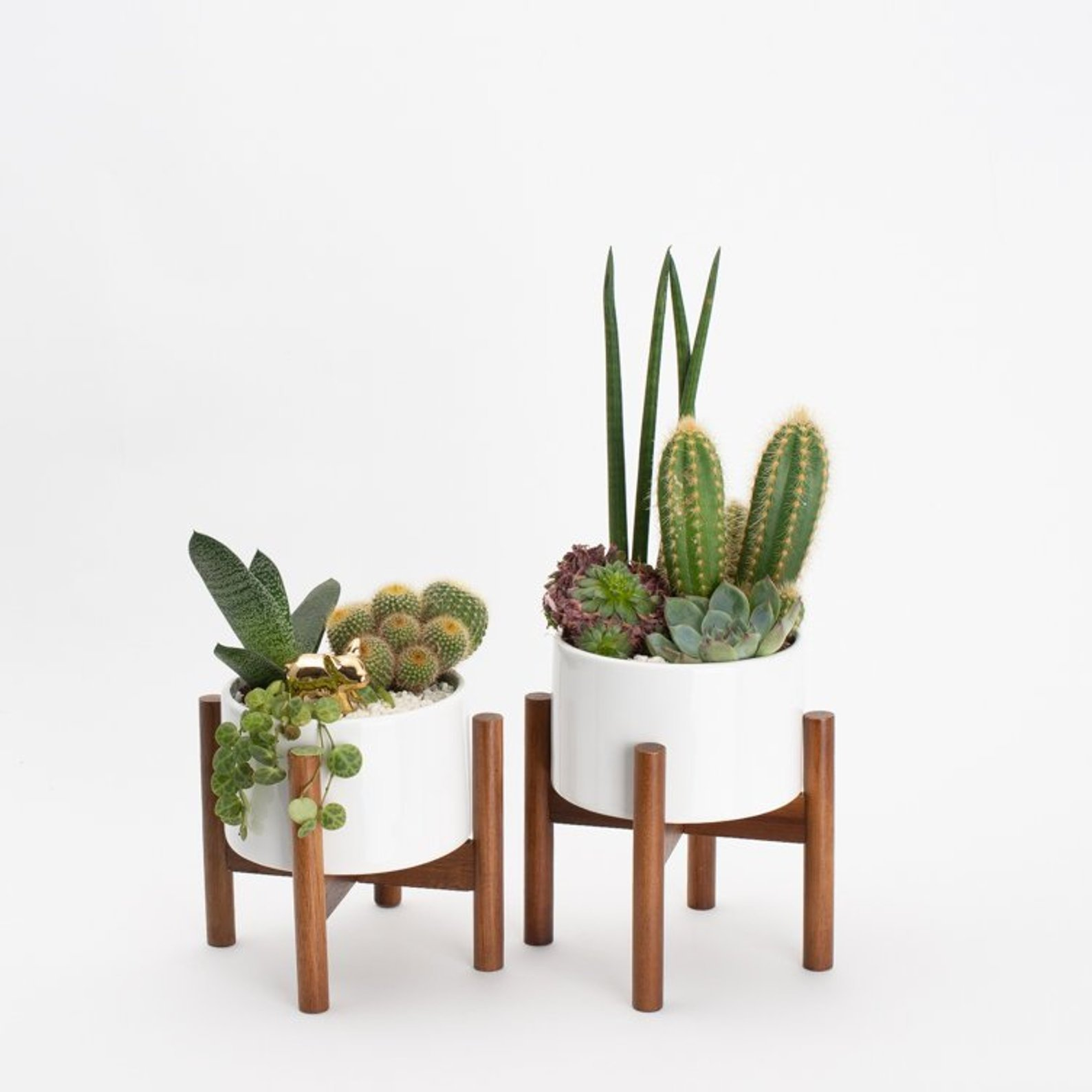 2 mid century modern style wood plant stands with ceramic planters filled with succulents and cacti