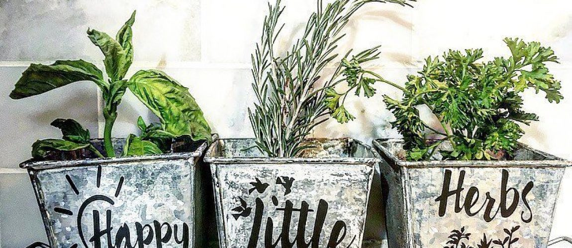 happy little herbs pots with tray